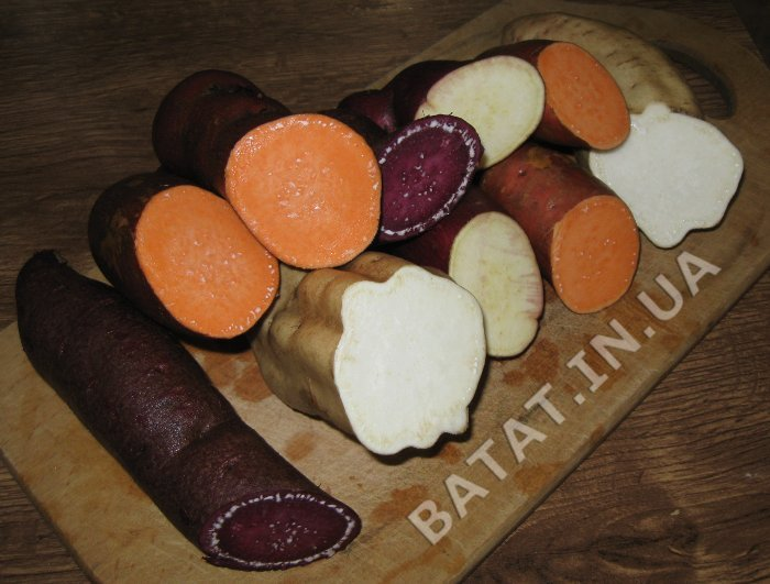 Сорта батата - цветовая палитра