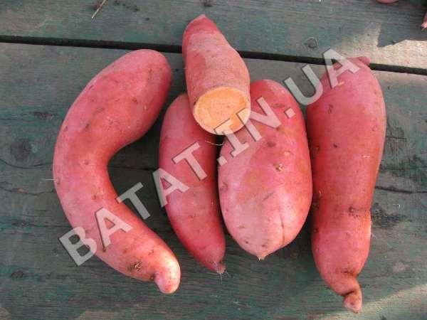 Оранжевый (beauregard) батат в разрезе
