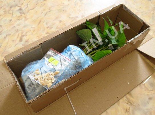 Пересылка рассады батата в специальной надежной упаковке