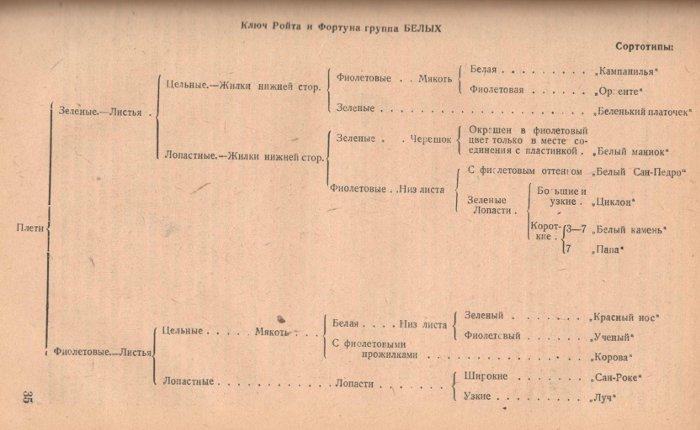 Ключ Ройта и Фортуна группа БЕЛЫХ